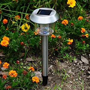 Best Outdoor Solar Lights Garden